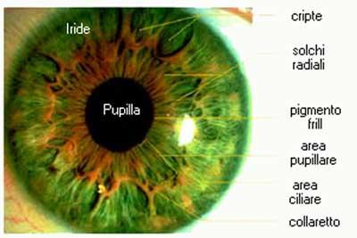 occhi e iride
