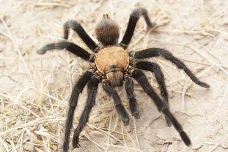 Aracnofobia: paura dei ragni